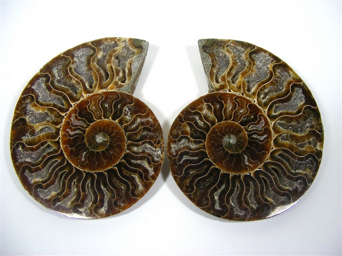 Large Ammonite Matched Pair - You Get Both Pieces