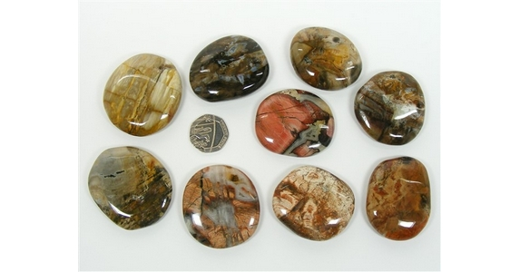 Petrified Wood Palm Stone