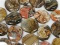 Petrified Wood Palm Stone